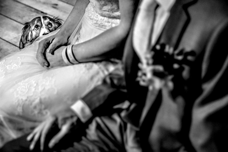 Bruidsfotografie Arno de Bruijn fotograaf bruiloft, mooi moment met de hond tijdens de trouwceremonie